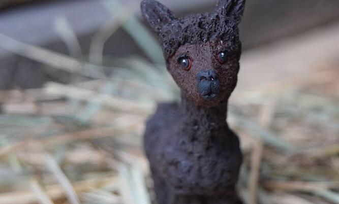 Baby Bullet Alpaca