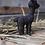 Thumbnail: Baby Bullet Alpaca