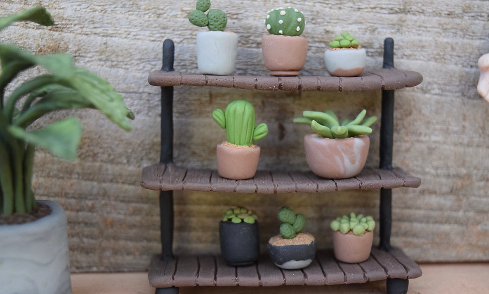 Succulent Display Shelf