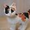 Thumbnail: Custom One of a Kind Handmade Cat Sculpture