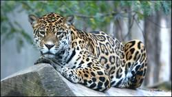Fauna 012