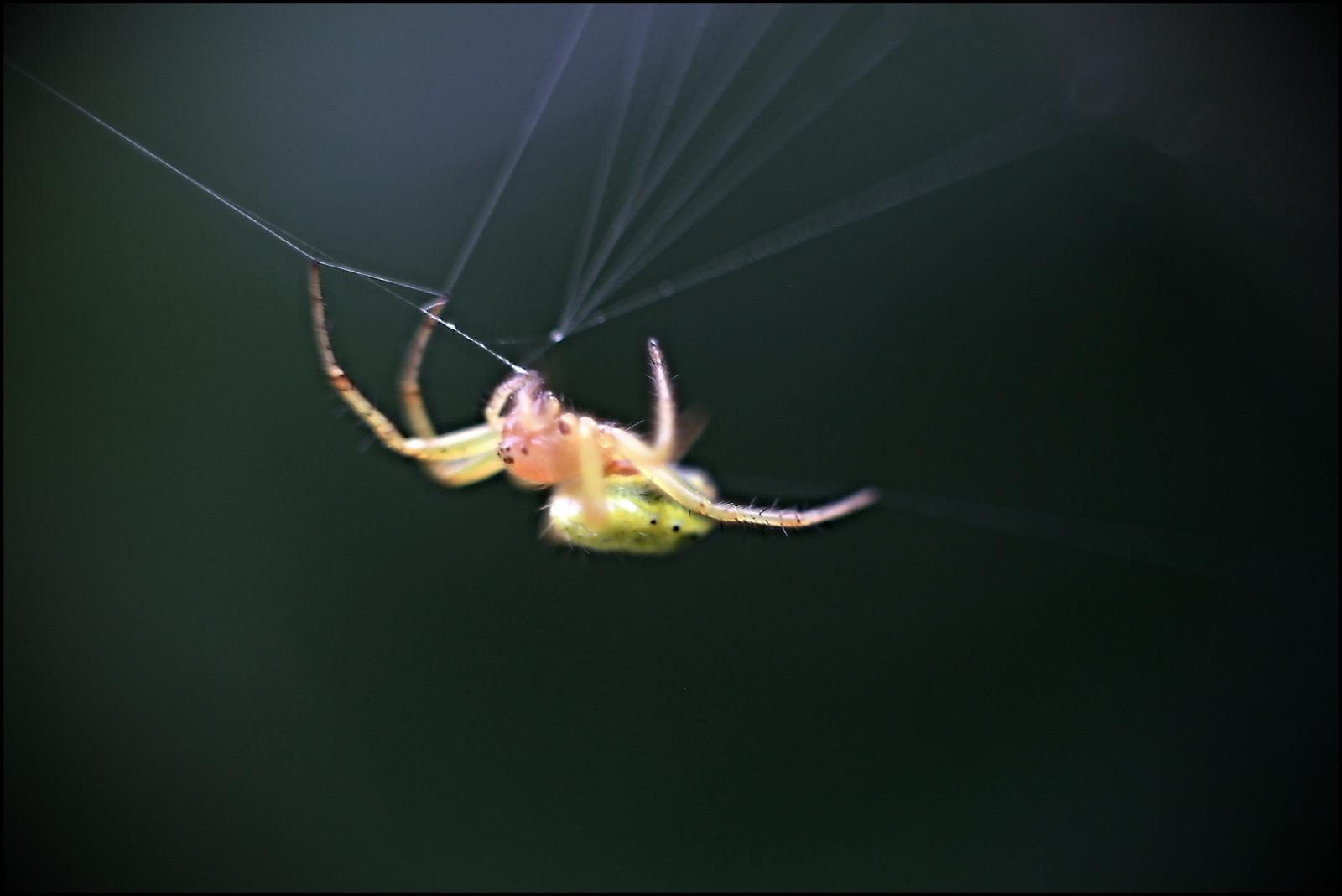 Fauna 021