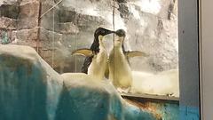 ペンギン.png