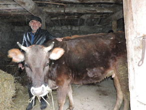 Visit to Mrs. Gohar and Family - Katnajur Village - 4/1/19— inKat'Najur, Lorri, Armenia. April