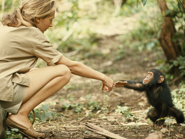 """I Fell In Love With The Real Tarzan""- Jane Goodall"