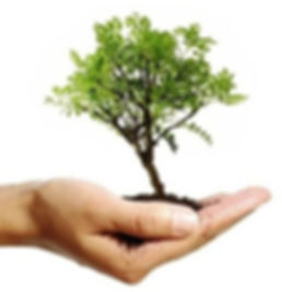 Tree Report Company - About us