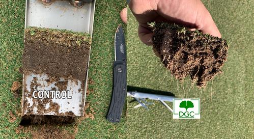 Golf Green Roots