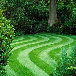 grass_seed.JPG