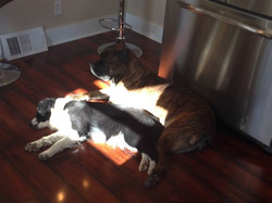 Gabby and Shelly sharing a sunny spot in the kitchen.  These 2 are an odd couple for sure but they a