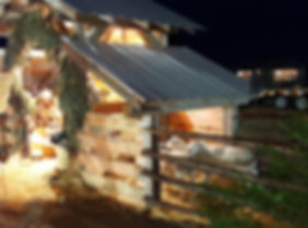 Ewes at the night of the nativity