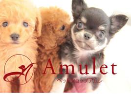 Amulet  代官山店