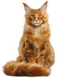 Pet Finotrato Prime Gatos Castrados.png