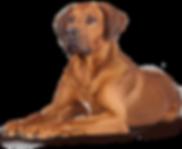 Fotos Pets Finotrato Gold - VB - 24.04.2