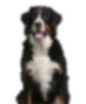 Pet Dogfit Adultos - VB - 10.12.2018.png