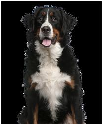 Pet Dogfit Adultos - VB - 10.12.2018.png