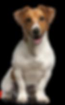 Pet Dogfit RPM - VB - 01.11.2018.png