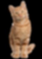 Catfit Meat Mix - Adult Cats.png