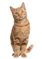 Catfit Meat Mix - Adult Cats.png