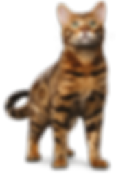 Pet Finotrato Prime Gatos Adulto.png