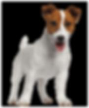 Pet - Finotrato - Patê Cães Carne -  VB