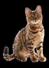 Pet - Finotrato - Patê - Cat Carne - VB