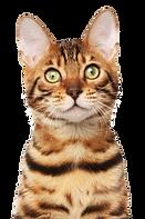 Gato - Besser Cat - VB - 13.08.2018 - Co