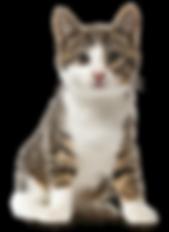 Pet Finotrato Prime Gatos Filhotes.png