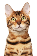 Gato - Besser Cat - VB - 13.08.2018.png