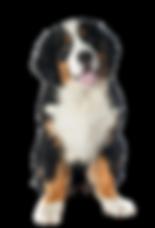 Pet Dogfit Filhote - VB - 12.12.2018.png