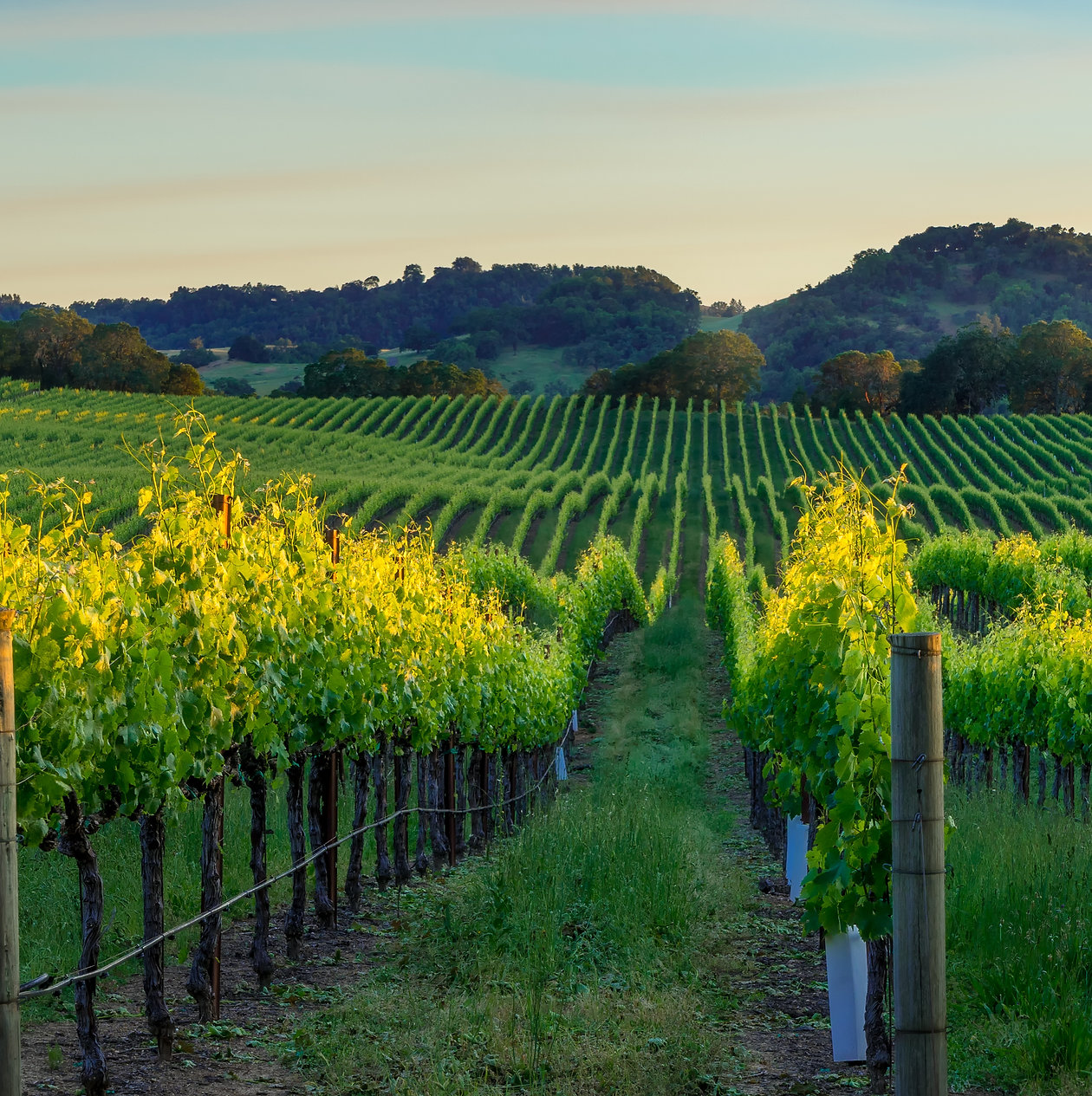 CA- vineyards.jpeg