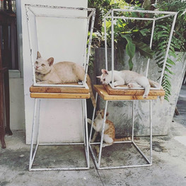 Street Cats in Chaing Mai