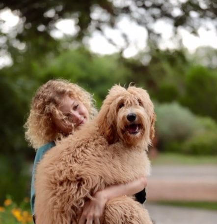Labradoodle Austin TX   Non Shedding Dog Breed   WALA