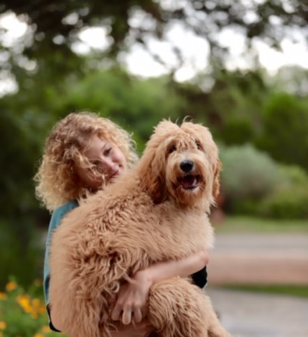 Labradoodle Austin TX | Non Shedding Dog Breed | WALA