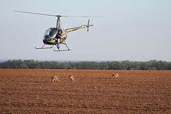 Young County Texas Hog Hunts