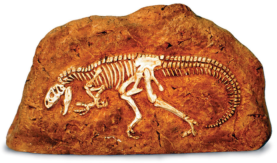 ALLOSAURUS IN ROCK