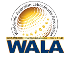 WALA Accredited Australian Labradoodles in Austin Texas