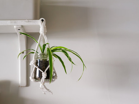 The Possibilities of a Miniature Macrame Plant Hanger