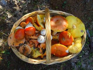 Mushroom hunt in Ikaria during autumn