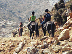 Horse riding lessons and tours