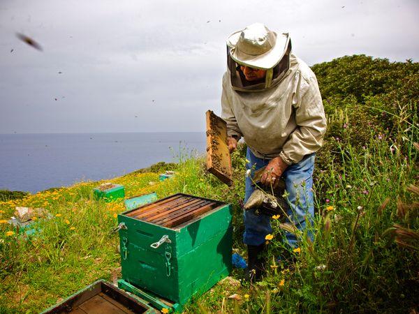 Ikaria honey tasting