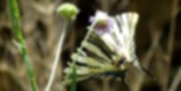 Gastronomy and longevity tour Ikaria