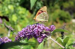 Butterfly in Ikaria