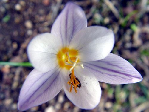 Wild flower in Ikaria