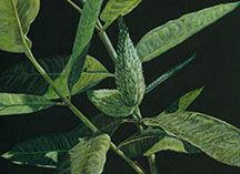 painting of milkweed