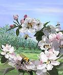 Fawcett_Frances_Wild_Pollinators4.jpg
