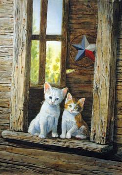 Texas Kittens