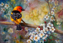Western Tanager in Pear