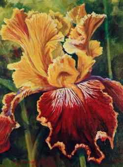 Yellow and Gold Iris