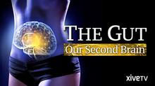 Vagal Tone, The Gut, and Mental Health