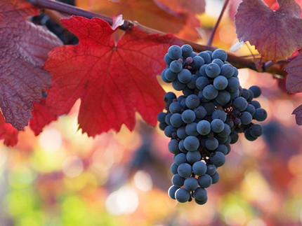 WHAT ON EARTH IS A BARBERA?